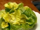 Obična salata