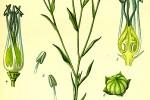 Pitomi lan